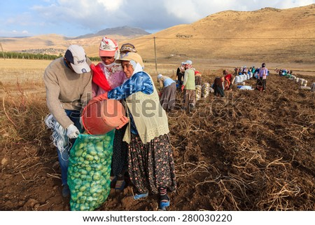 KAYSERI,TURKEY-October 31,2009 : Uidentified women and men harvest potatoes in the field as a seasonal worker in agricultural production  sector in Anatolia, Develi , Turkey Country  - stock photo
