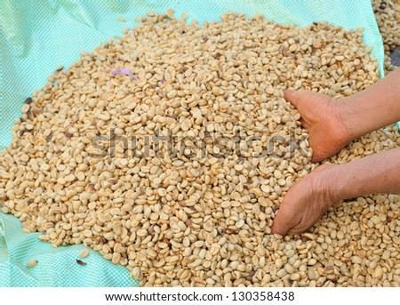 keeping coffee beans  after drying in the sun. - stock photo