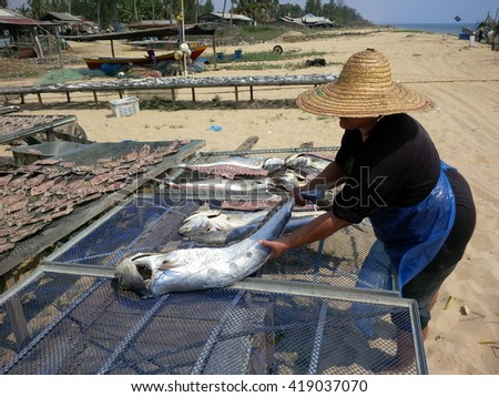 Kelantan, Malaysia - 1 MAY 2016: Worker dry salted fish under the sun during the daylight at fisherman village. This Processed normally took 2-3 days to completely dry the fish. - stock photo