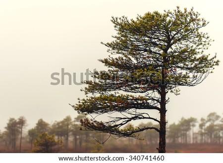 Kemeri National Park in autumn. Latvia - stock photo