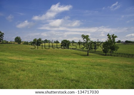 Kentucky Bluegrass - stock photo