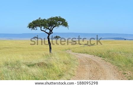 Kenyan Masai Mara savannah landscape in summer. Africa, Kenya - stock photo