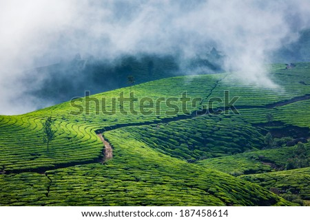 Kerala India travel background - green tea plantations in Munnar, Kerala, India - tourist attraction - stock photo