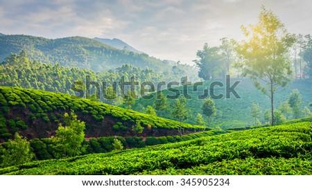 Kerala India travel background - panorama of green tea plantations in Munnar, Kerala, India in the morning on sunrise - stock photo
