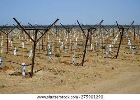 KERN COUNTY, CA - MAY 6, 2015: Despite the severe drought, this Central California farm has a newly-planted vineyard. The small grape plants are served with an extensive drip irrigation system. - stock photo