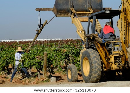 KERN COUNTY, CA -  OCTOBER 10, 2015: Aided by a backhoe, farm workers tear out supports and grape plants in this old vineyard. Later, it will be replanted.