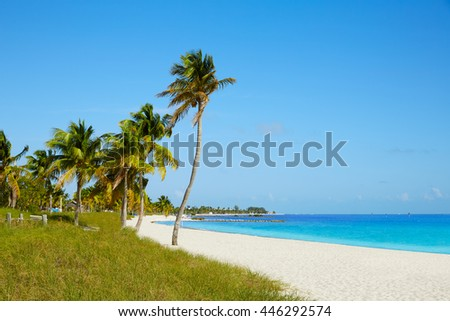Key west florida Smathers beach palm trees in USA