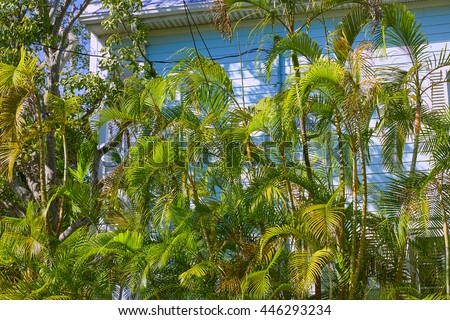 Key west street house palm trees facades in Florida USA