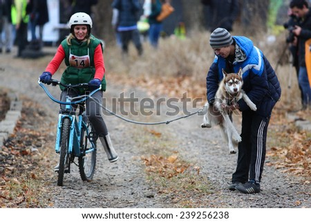 Kharkov, UKRAINE - November 15, 2014: Marina Kalchuck during one dog Bikejoring Women's 3100 m at Sled dogs dry land race Autumn Cup - 2014 - stock photo
