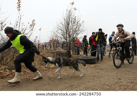 Kharkov, UKRAINE - November 15, 2014 Unidentified at Sled dogs dry land race Autumn Cup - 2014 - stock photo