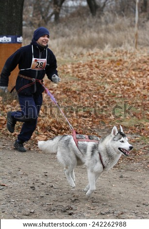 Kharkov, UKRAINE - November 15, 2014: Vladimir Golovin at canicross heats during Men's 3100 m at Sled dogs dry land race Autumn Cup - 2014 - stock photo