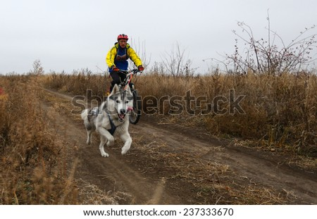 Kharkov, UKRAINE -?? November 15, 2014: Yuri Polyanichko during one dog Bikejoring Men's 3100 m at Sled dogs dry land race Autumn Cup - 2014 - stock photo