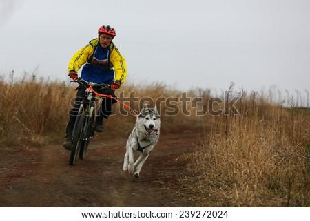 Kharkov, UKRAINE - November 15, 2014: Yuri Polyanichko during one dog Bikejoring Men's 3100 m at Sled dogs dry land race Autumn Cup - 2014 - stock photo
