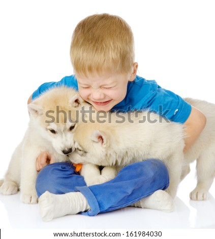 Kid embracing two hasky puppies. isolated on white background - stock photo