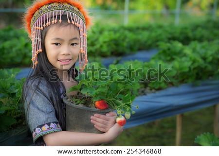 kid Farmers pick up strawberry from Doi Ang Khang plantation - stock photo