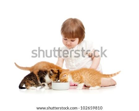 kid feeding cats with milk - stock photo