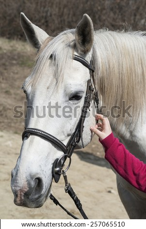 kid hand on horse head. child rub down horse. - stock photo
