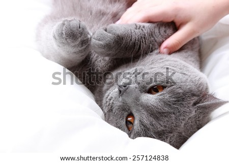 Kid hand plaiyng with fluffy cat - stock photo