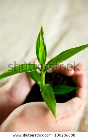Kid hands holding sapling bamboo in soil.