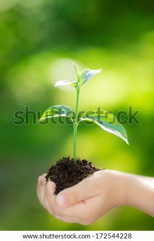 Kid holding young plant in hands against spring green background. Ecology concept - stock photo