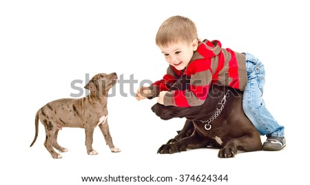 Kid playing with the dog and puppy isolated on white background - stock photo