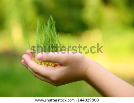 Kid's hands holding green growing plant over nature background. New life, spring and ecology concept - stock photo