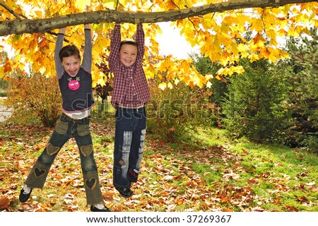 kids hanging from branch of tree - stock photo