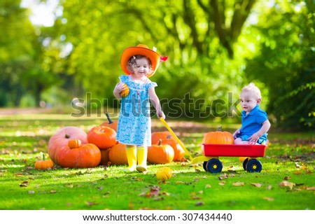 Kids playing at pumpkin patch at Halloween. Children play and pick pumpkins on a farm. Toddler girl and baby boy in a wheel barrow harvest vegetables in autumn. Fall outdoor fun for family with child - stock photo