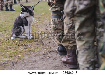 """KIEV,UKRAINE - March 26 : Husky puppy on leash near the feet of soldiers during parade """"RUH 100.Tryzub"""" - military training or civilians in Kiev,Ukraine on March 26,2016. - stock photo"""