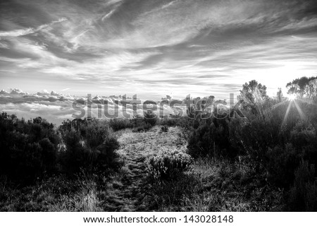 Kilimanjaro Morning - stock photo