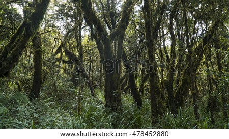 Kilimanjaro Rainforest Background