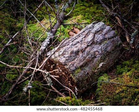 kind of tree bark, stump, dark forest, natural background with green moss, two fir cones and broken branches, stump