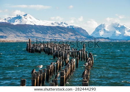 King Cormorant colony, Old Dock, Puerto Natales, Antarctic Patagonia, Chile - stock photo
