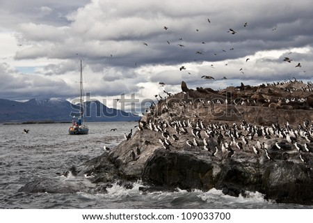 King Cormorant colony sits on an Island in the Beagle Channel. Sea lions are visible laying on the Island as well. Tierra del Fuego, Argentina - Chile - stock photo