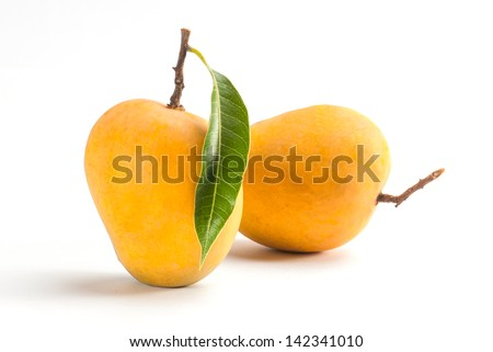 King of fruits; Alphonso yellow Mango fruit duo with stems and green leaf isolated on white background - stock photo