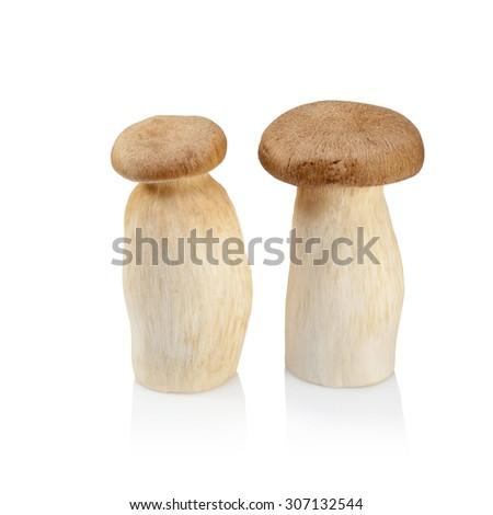King Oyster mushroom (Eringi) isolated on white backgroud. - stock photo