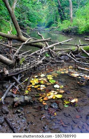 Kinnikinnick Creek Conservation Area Illinois - stock photo