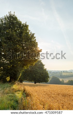 KIRKBY-IN-ASHFIELD, ENGLAND - AUGUST 15: Wheat fields at harvest time, lit by early morning sun. In Kirkby-In-Ashfield, Nottinghamshire, England. On 15th August 2016.