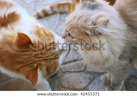 Kissing red and tawny cats.