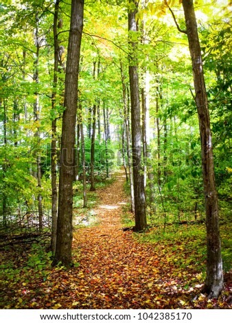 Kitchener, Ontario / Canada - June 22 2016: Hiking trail in autumn with changing leaves.
