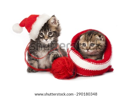 kiten a santa hat - stock photo