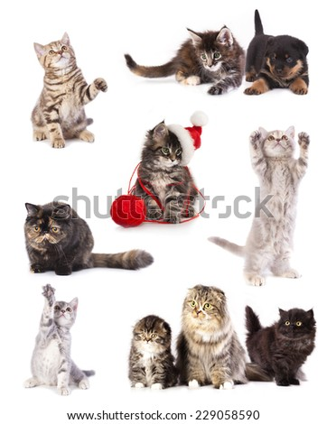 kiten a santa hat, set - stock photo