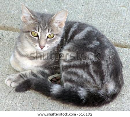 Kitten - stock photo