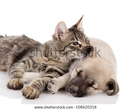 Kitten and a pup together. isolated on white background - stock photo