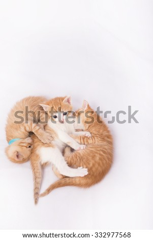 Kitten and cats playing on white background - stock photo