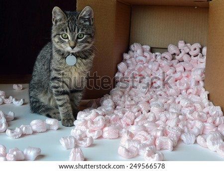 Kitten and packing peanuts - stock photo
