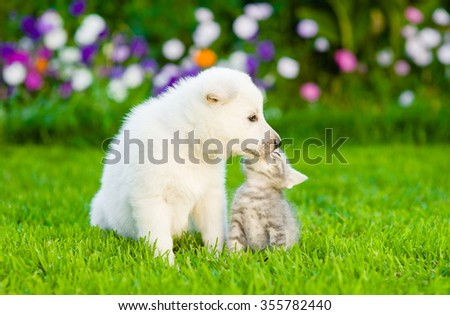 Kitten and puppy are kissing on the green lawn - stock photo