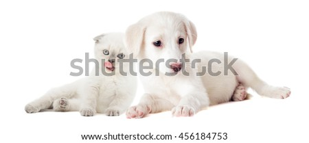 kitten and puppy beside