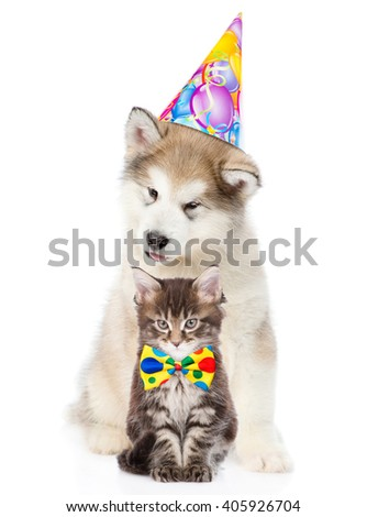 Kitten and puppy in birthday hat looking at camera together. isolated on white background - stock photo