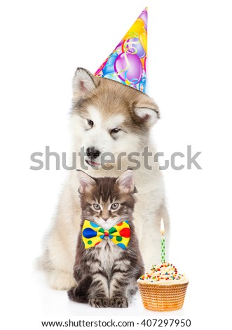 Kitten and puppy in birthday hat with cupcake. isolated on white background - stock photo